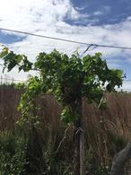 Foto Farms en Venta en  Capdeville,  Las Heras  La Polvorosa