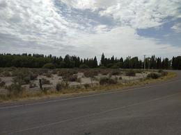 Foto Chacra en Venta en  Trelew ,  Chubut  Chacra Ruta 7
