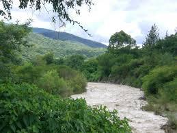 Foto Terreno en Venta en  Tacanas,  Trancas  San Pedro de Colalao (Las Tacanas). Ruta al 300