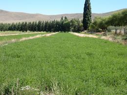 Foto Campo en Venta en  Corralito,  Pilcaniyeu  Pichileufu