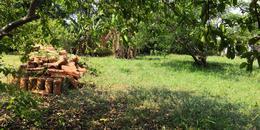 Foto Terreno en Venta en  Garden,  Luque  Excelente Terreno de 723 m2 en Barrio Residencial Jardin de Oro, Conmebol, America - Luque