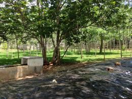Foto Terreno en Venta en  Tizimín ,  Yucatán  Terreno/Rancho sobre avenida PRECIO POR MUY DEBAJO DE AVALÚO!!!