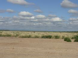 Foto Campo en Venta en  Lamadrid,  Graneros  Arboles Grandes