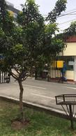 Foto Departamento en Venta en  Pueblo Libre,  Lima  ALT. CDRA 10 AV. BOLIVAR
