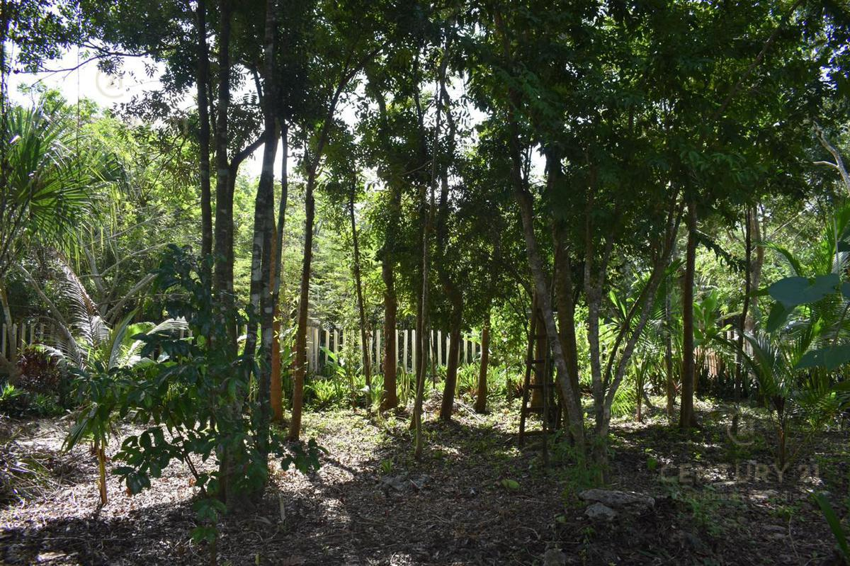 Buenavista Land for Sale scene image 13