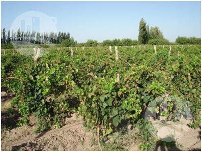 Foto Fincas en Venta en  Jaime Prats,  San Rafael  Finca de 45 hectáreas