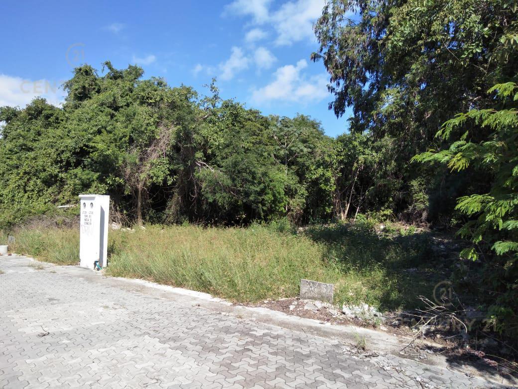 Playa del Carmen Land for Sale scene image 7