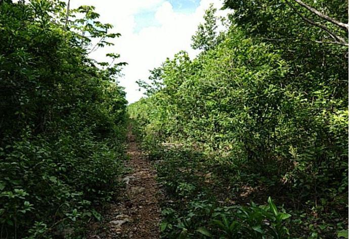 Jardines del Sur Terreno for Venta scene image 3