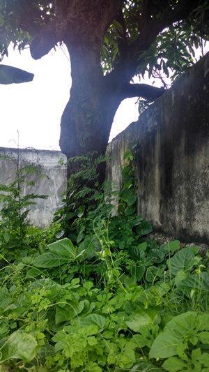 Foto Terreno en Venta en  Veracruz ,  Veracruz  Terreno en VENTA en Col. Centro, Veracruz, Ver.
