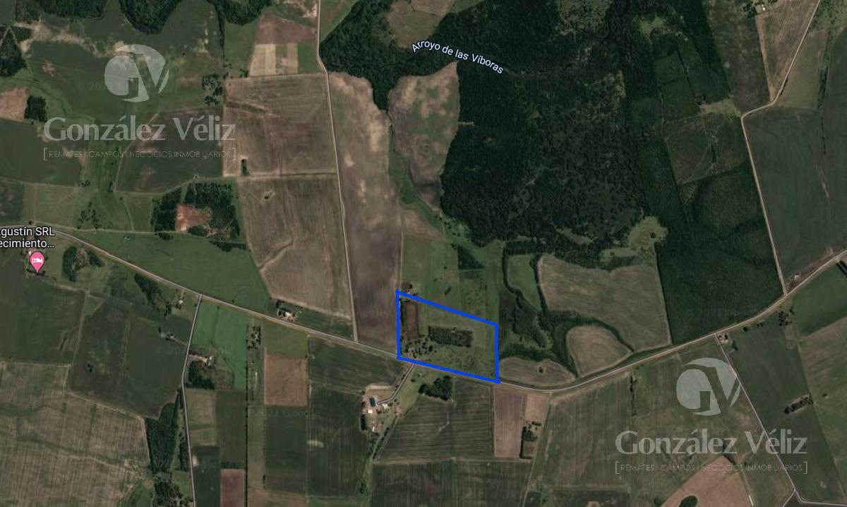 Foto Chacra en Venta en  Viboras,  Carmelo  Viboras y vacas - a 20km de Carmelo