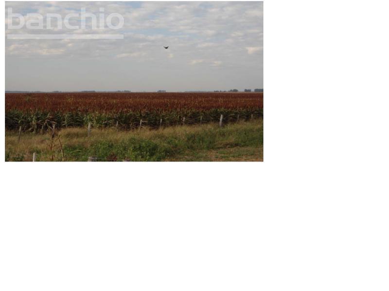 2000 ha  Ganaderas Ca�ada Rosquin, Cañada Rosquin, Santa Fe. Venta de División campos - Banchio Propiedades. Inmobiliaria en Rosario