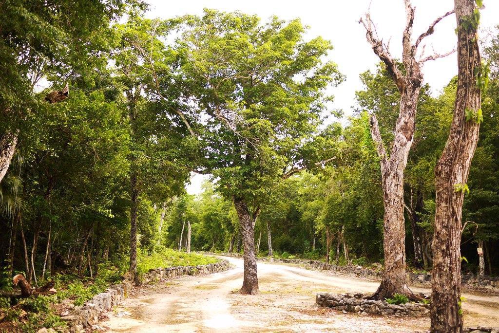 Ciudad Chemuyil Land for Sale scene image 2