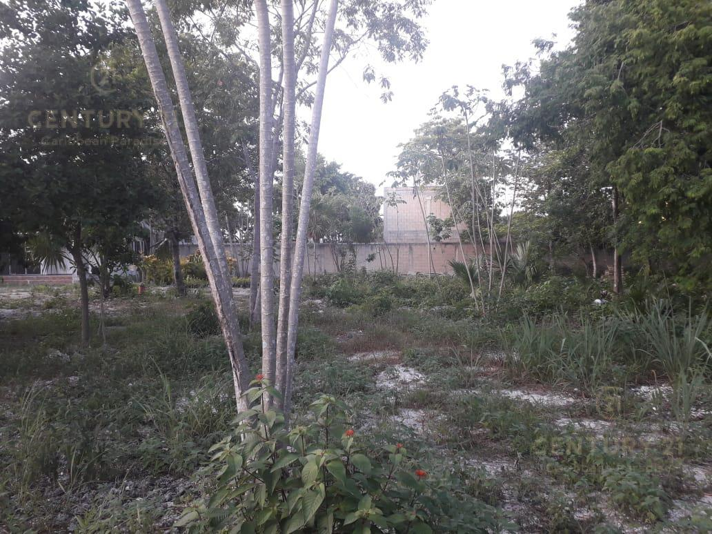 Benito Juárez Land for Sale scene image 6