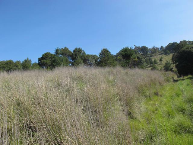 Foto Terreno en Venta en  San Miguel Ameyalco,  Lerma  TERRENO EN VENTA AMEYALCO SHCAT-1056