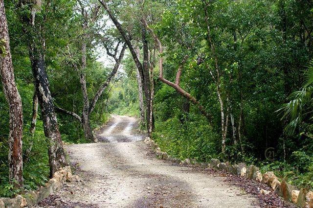 Tulum Land for Sale scene image 3