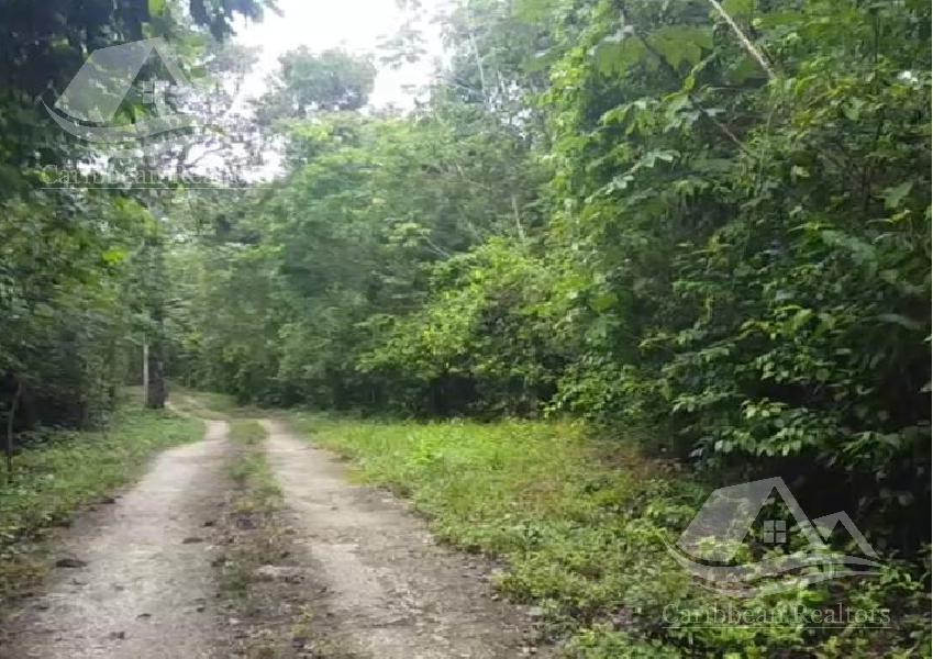 Foto Terreno en Venta en  Puerto Morelos,  Cancún  Terreno en Venta en Puerto Morelos/ Riviera Maya/Ruta de los Cenotes