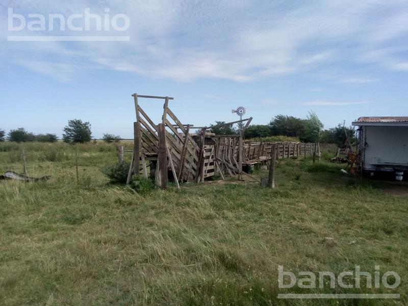 595 ha Mixtas Arequito, Arequito, Santa Fe. Venta de División campos - Banchio Propiedades. Inmobiliaria en Rosario