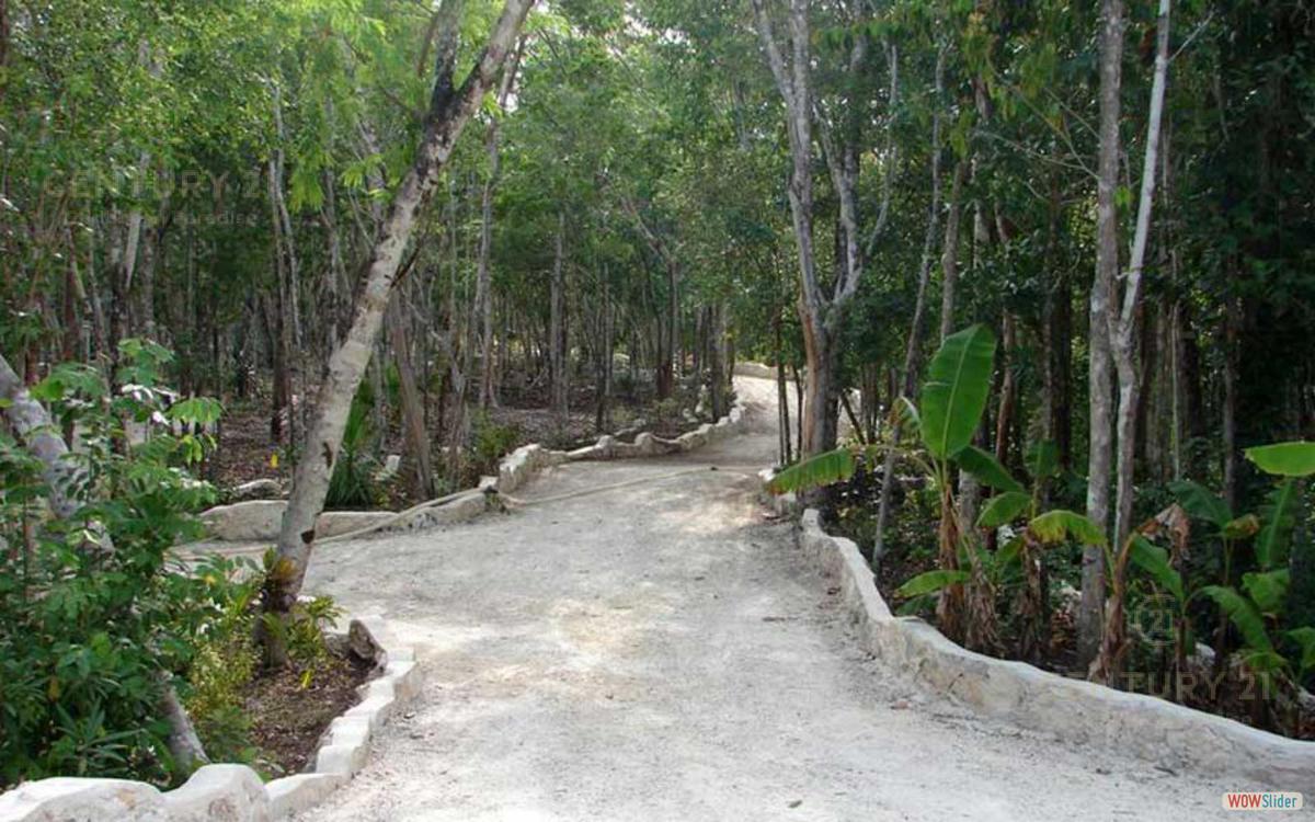 Tulum Land for Sale scene image 1