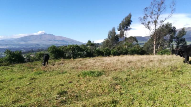 Foto Terreno en Venta en  Sur de Quito,  Quito  Terreno de Venta