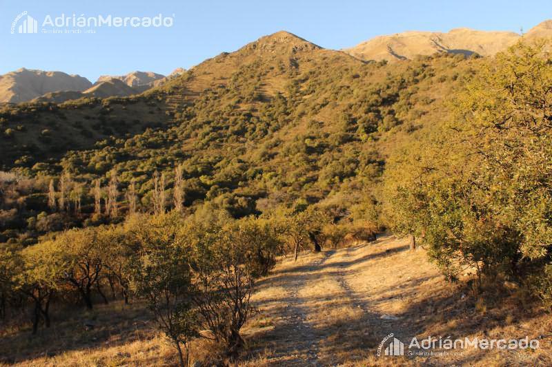 Foto Terreno en Venta en  Los Nogales,  Merlo  San Luis  Villa de Merlo