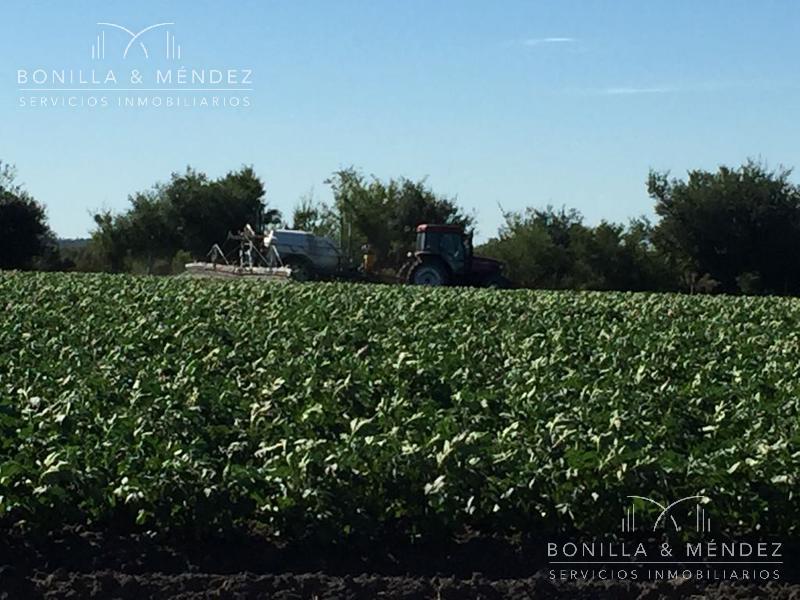 Foto Campo en Venta en  San Jose ,  San José  Camino de la Costa