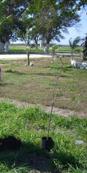 Foto Terreno en Venta en  Villa Aldama,  Aldama  Venta de Terreno en Paraíso Tortugas, Aldama, Tam.