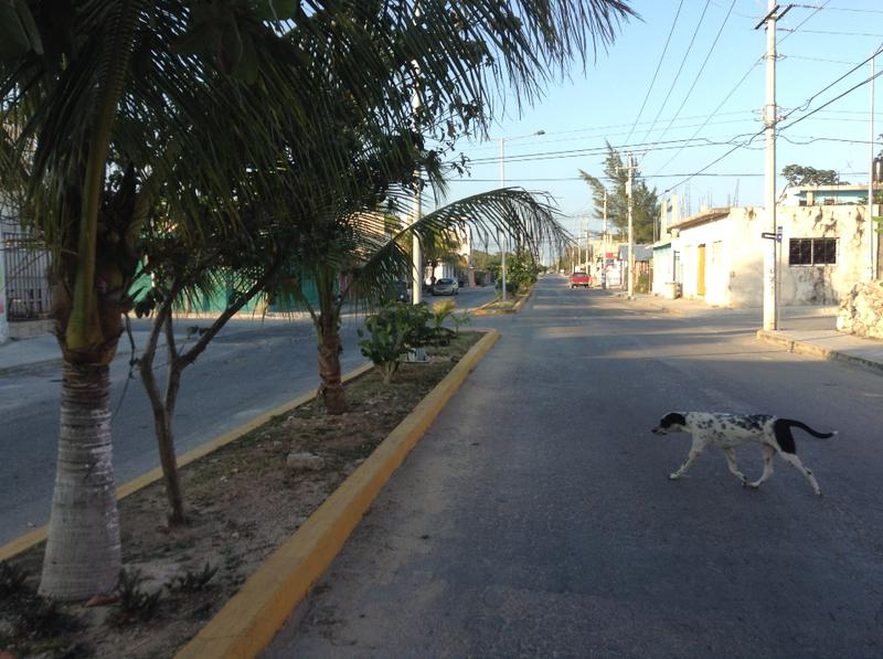 Foto Terreno en Venta en  Luis Donaldo Colosio,  Playa del Carmen  terreno en venta av 10 turistico playa del carmen riviera maya