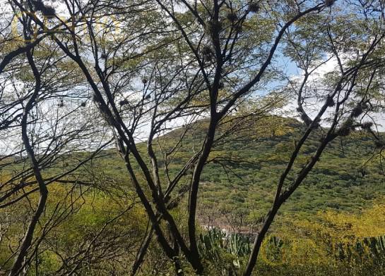 Foto Terreno en Venta en  Altozano el Nuevo Queretaro,  Querétaro  EXCLUSIVO TERRENO RESIDENCIAL EN VENTA ALTOZANO