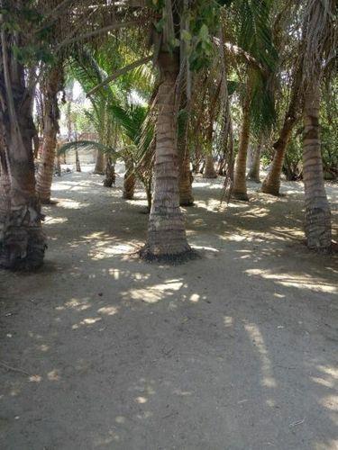 Foto Terreno en Venta en  Ejido Isla de La Piedra,  Mazatlán  SE VENDE TERRENO DE PLAYA EN ISLA DE LA PIEDRA MAZATLAN