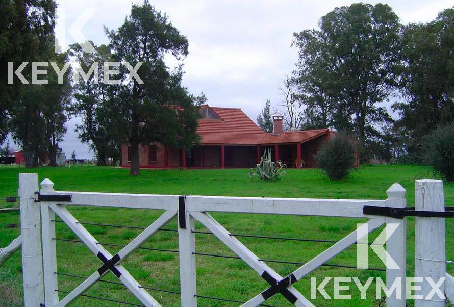 Foto Campo en Venta en  Las Flores ,  Interior Buenos Aires  Campo - Ruta 3 KM 20 - 372 hectáreas