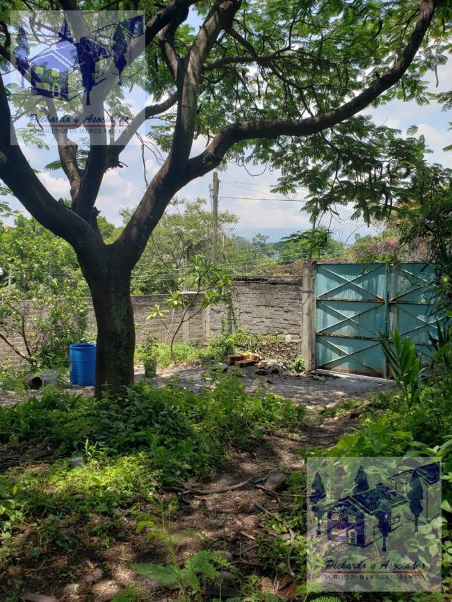 Foto Terreno en Venta en  Acatlipa Centro,  Temixco  Temixco Morelos