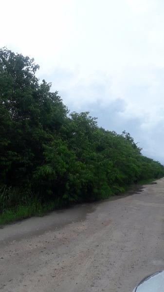 Foto Terreno en Venta en  Cancún,  Benito Juárez  Hermoso terreno en Venta en la Colonia Bonfil Cancun C1793