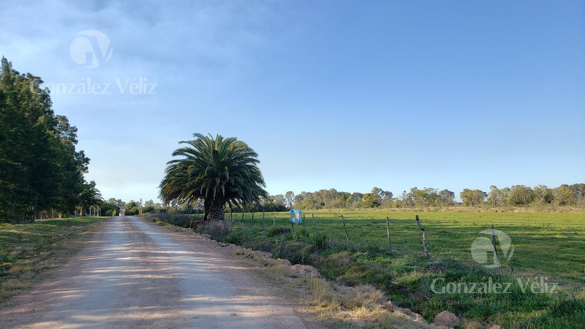 Foto Chacra en Venta en  Carmelo ,  Colonia  Ruta 21 entrando por Chacras de frontera