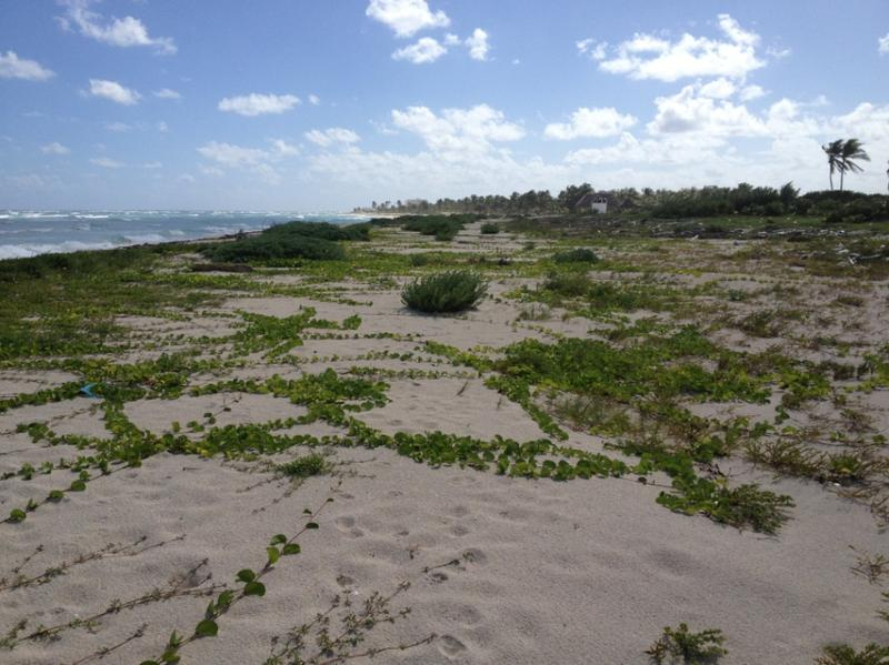 Mahahual Land for Sale scene image 1