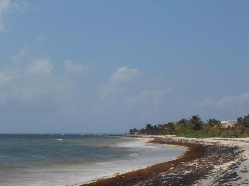 Mahahual Land for Sale scene image 13