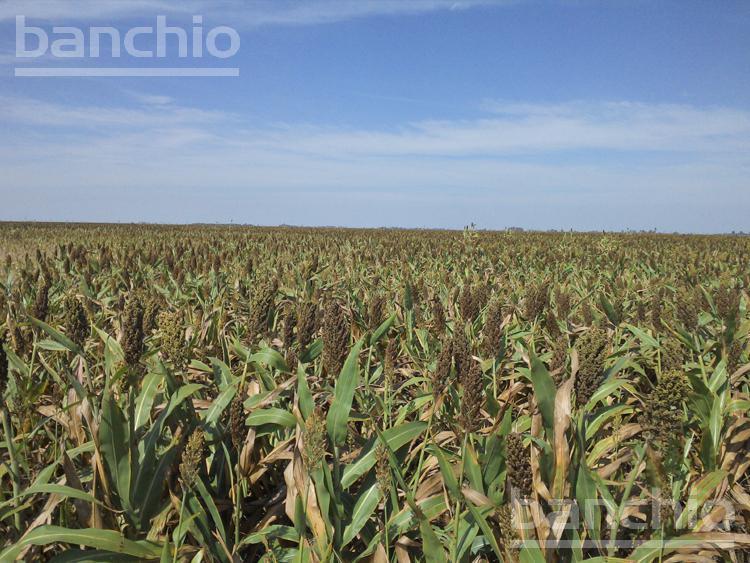150 HA Mixtas San Genaro, San Genaro, Santa Fe. Venta de División campos - Banchio Propiedades. Inmobiliaria en Rosario