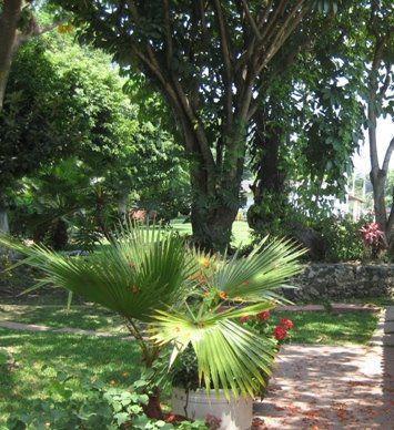 Foto Terreno en Venta en  Villas del Bosque,  Nicolás Romero  EDO MEX. NICOLÁS ROMERO  184ha.  Bosques del Paraíso,