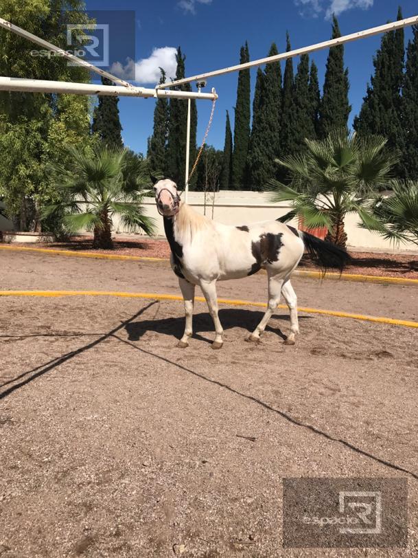 Foto Quinta en Venta en  Aldama ,  Chihuahua  RANCHO EN VENTA EN ALDAMA CHIHUAHUA