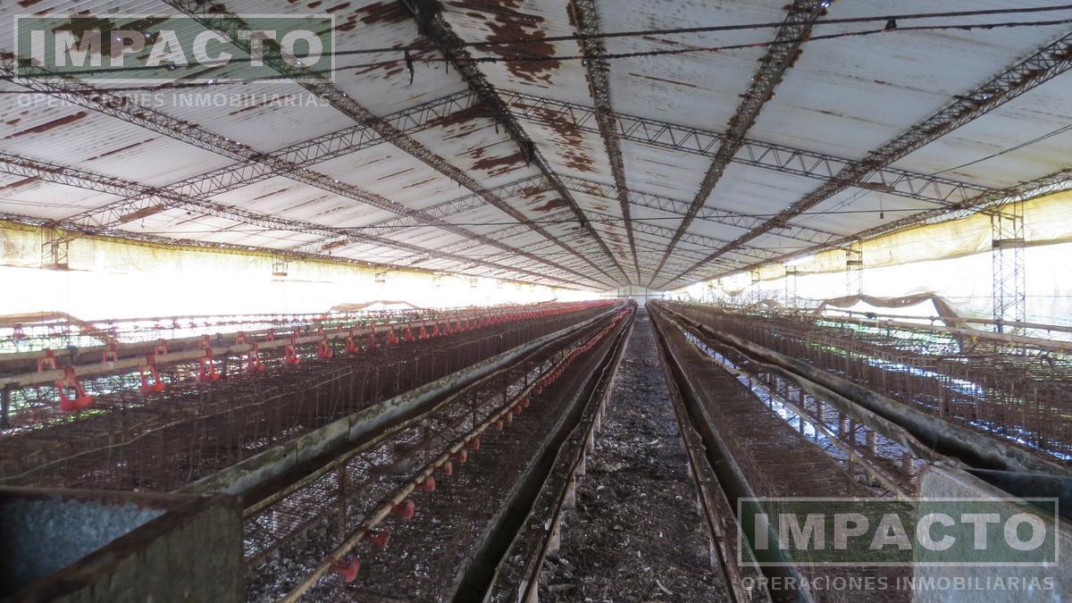 Foto Campo en Venta en  Marcos Paz ,  G.B.A. Zona Oeste  Granja de gallinas ponedoras