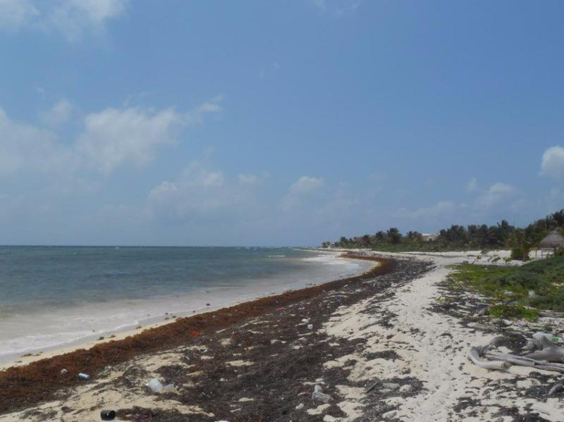 Mahahual Land for Sale scene image 10