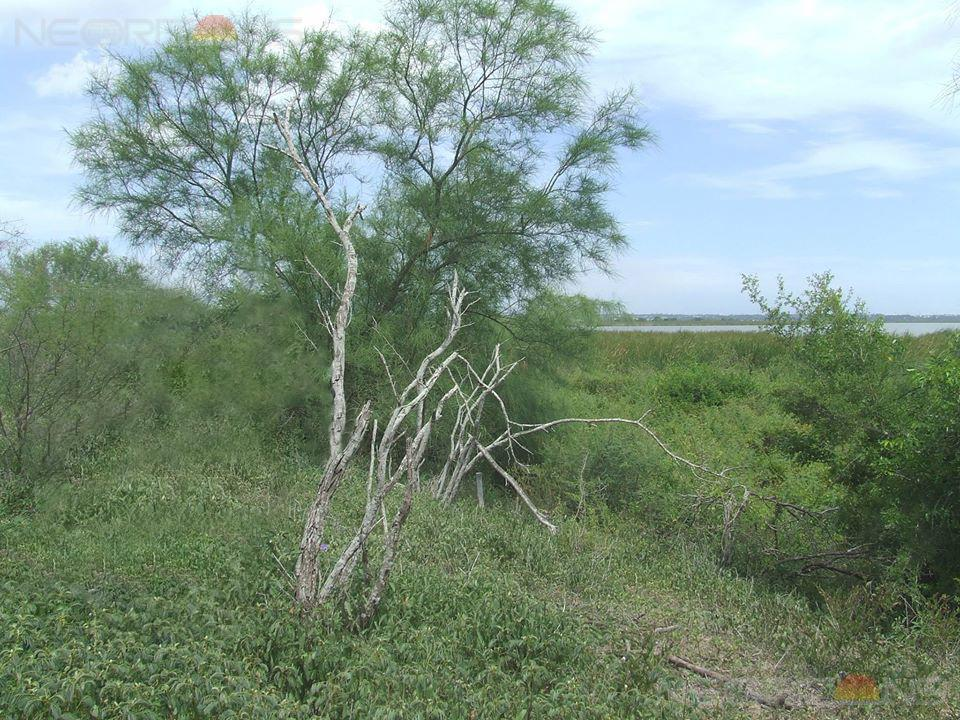 Foto Terreno en Venta en  Altamira ,  Tamaulipas  Terreno Rustico para Ganado o Siembra, Altamira