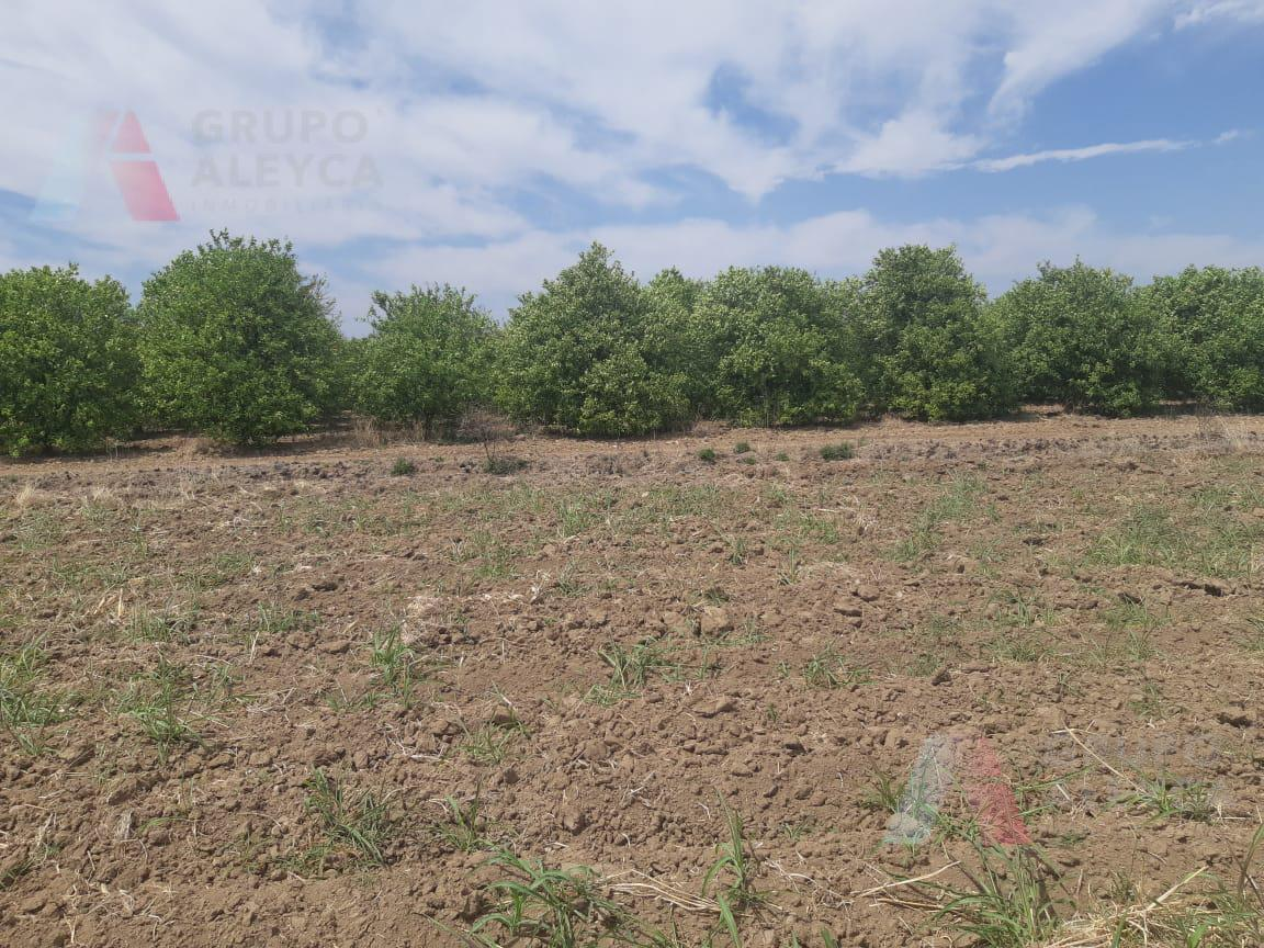 Foto Terreno en Venta en  Guadalupe,  Linares  Hacienda Guadalupe, Linares, N. L.