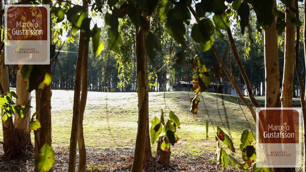 Foto Terreno en Venta en  Campos de Ibarlucea,  Ibarlucea  Campos de Ibarlucea
