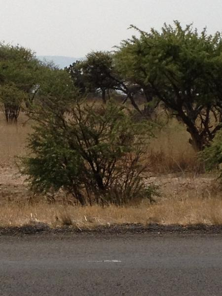 Foto Quinta en Venta en  La Florida,  San Felipe  Terreno rústico Agostadero con frente carretero de 1km. carretera 77