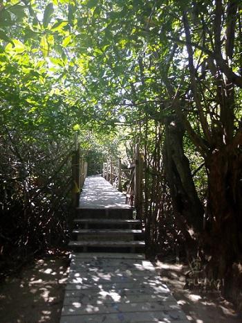 Tulum Land for Sale scene image 12