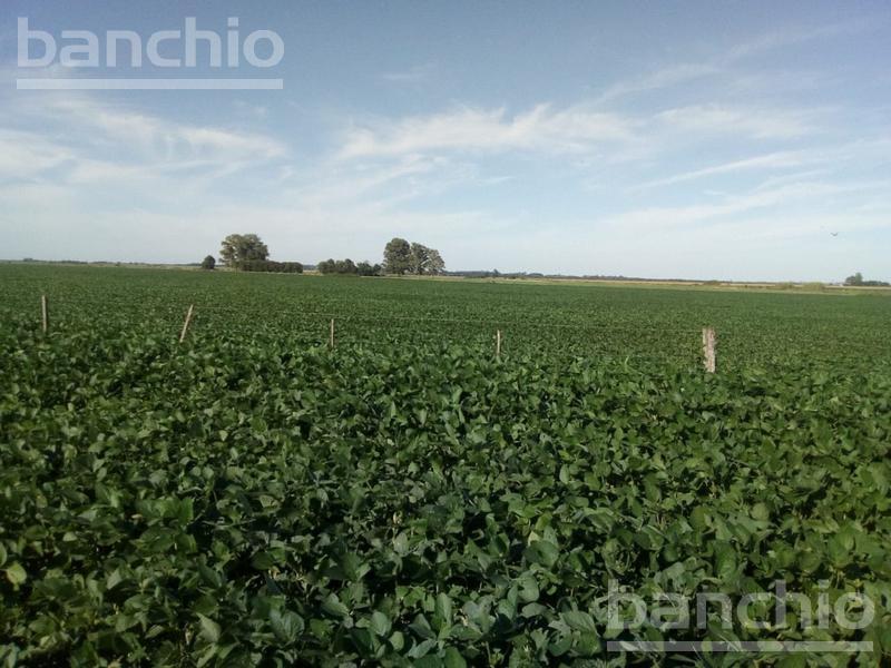130 ha Agrícolas Colonia Bigand, Colonia Bigand, Santa Fe. Venta de División campos - Banchio Propiedades. Inmobiliaria en Rosario
