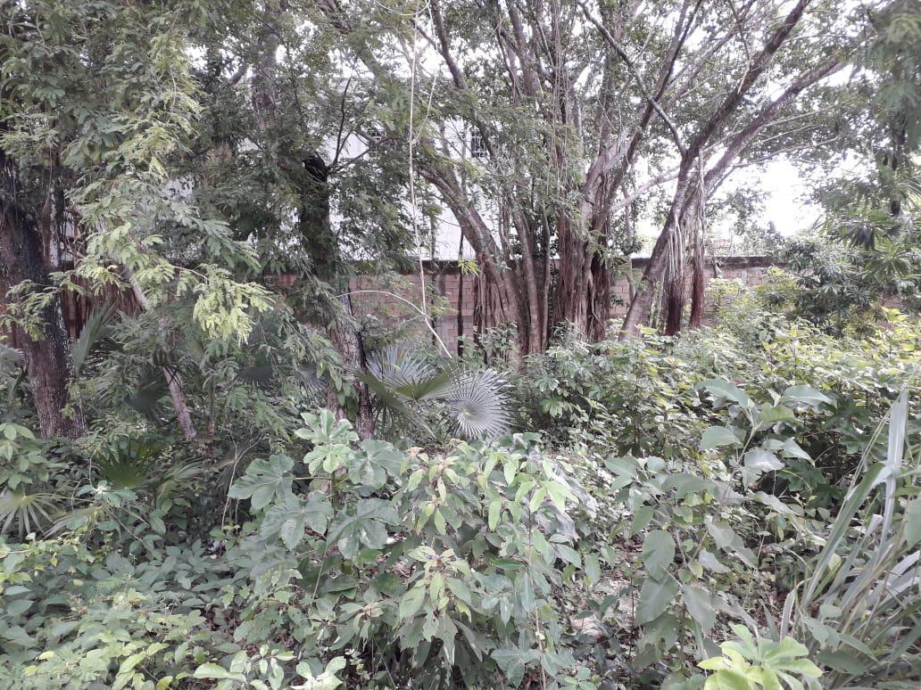 Benito Juárez Land for Sale scene image 17