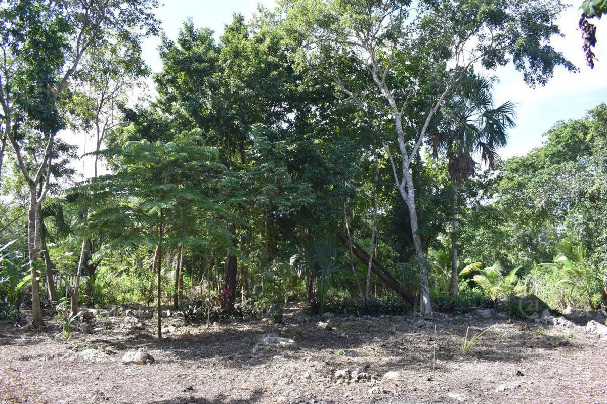 Buenavista Land for Sale scene image 15