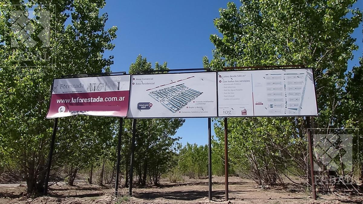 Foto Terreno en Venta en  Añelo,  Añelo  Ruta 17 - Km 156, Barrio La Forestada