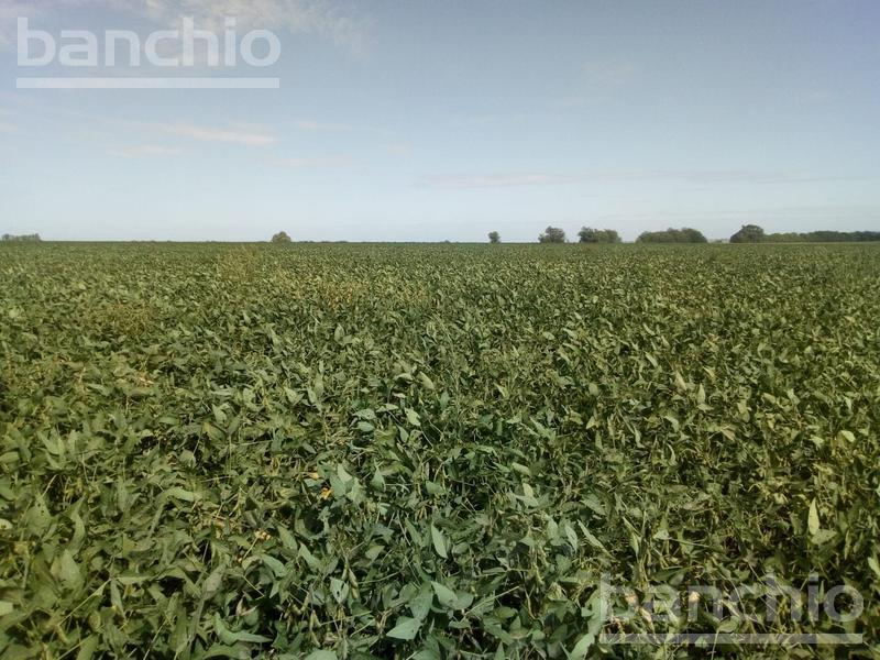 25 ha agrícolas Acebal, Acebal, Santa Fe. Venta de División campos - Banchio Propiedades. Inmobiliaria en Rosario